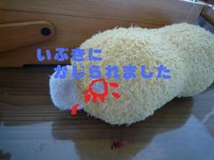 2008090005_2